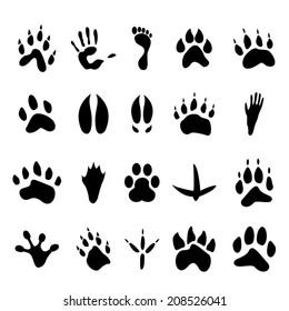 Collection of twenty animal and human footprints