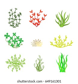 Collection of types of algae and seaweed, vector illustration.
