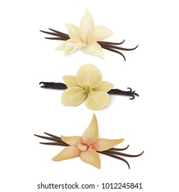 Collection of vanilla flower with pods.