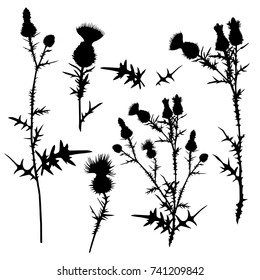 A collection with a variety of silhouettes of thistles. Vector illustration on white background.