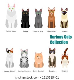 collection of  various cats with breed name