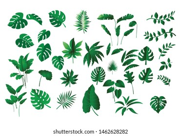 collection various of green Tropical leaves concept, isolated  elements on  white background