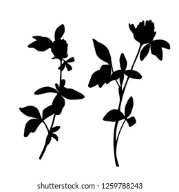 Collection of vector black silhouettes of clover. Isolated on white background. Design objects for decoration, textile, poster, card, invitation, announcements, advertisement.