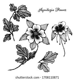 Collection of vector detailed black hand drawn sketch Aquilegia flowers illustration. Beautiful floral Columbine symbols for greeting cards design, wedding and birthday decoration, sticker, logo
