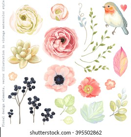Collection vector flowers ranunculus, anemone, succulent, Robin bird, wild Privet Berry, green branches and leaves in vintage watercolor style.