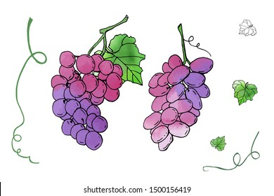 Collection of vector grapes. Cute cartoons with watercolor texture. Food background. Fall harvest set.  Wine, juice, thanksgiving. Hand drawn design elements. For postcards, greetings, cards, logo.