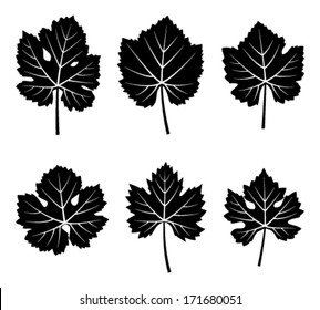 collection of vector grapevine leaves isolated on white background
