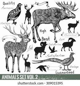 Collection of vector hand drawn detailed wild animals