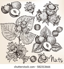 Collection of vector high detailed hand drawn nuts in engraved style