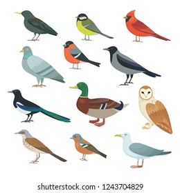 Collection of vector illustrations  city birds