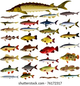 collection of vector images of fish