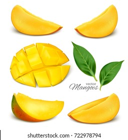 Collection of vector mangoes. Vector illustration