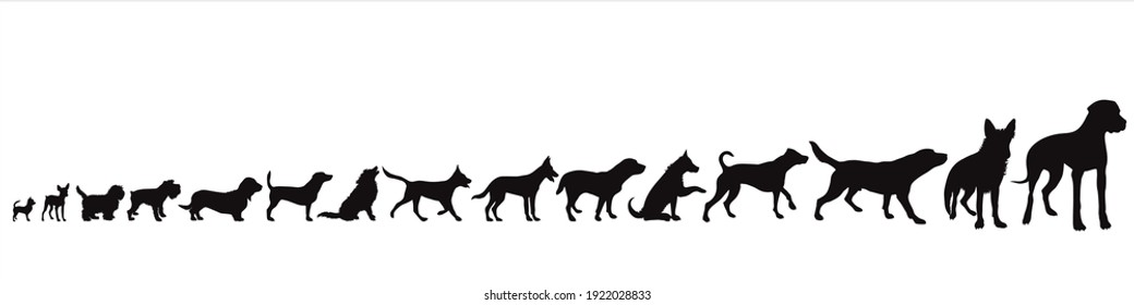 Collection of vector silhouette of dogs, from small to big. Symbol of animal and pet.