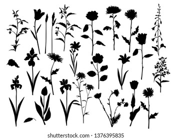 Collection of vector silhouettes of wild flowers and grass, daisy, chrysanthemum,  chamomile, rose, lily, carnation, black color, isolated on white background