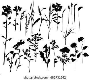 Collection of vector silhouettes of wild flowers, black color, isolated on white background