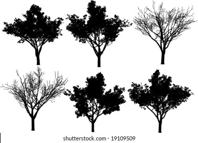 collection vector trees + fall tree
