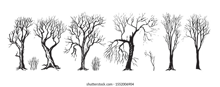 Collection vector vintage hand drawn illustration in sketch style. Set of different silhouettes of trees and bushes without leaves. Dense forest. Outline graphic isolated on white. Elements for design