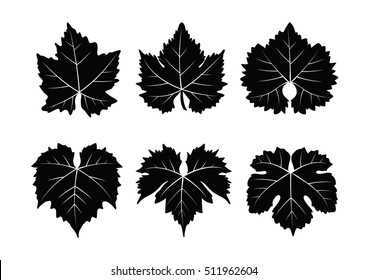 collection of vector wine leaves isolated on white background