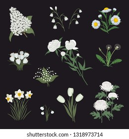 Collection of white flowers on a black background. There are daffodils, peonies, tulips, lilac, chamomile, dandelions, chrysanthemums, snowdrops, lilies of the valley, bells and crocuses in the image