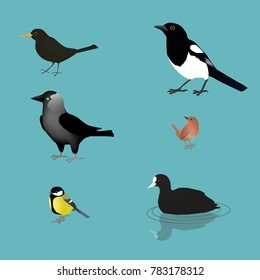 collection of wild birds