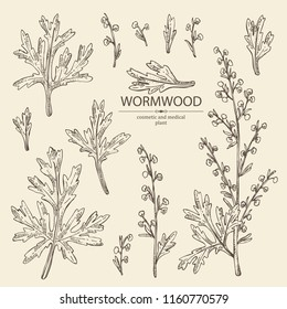 Collection of wormwood: wormwood branch, wormwood flowers and leaves . Cosmetics and medical plant. Vector hand drawn illustration.