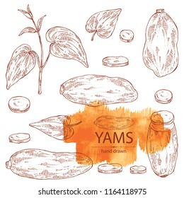 Collection of yams: tuber of yams, leaves and slice. Vector hand drawn illustration.