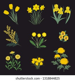 Collection of yellow flowers on a black background. There are daffodils, mimosa, tulips, dandelions, chrysanthemums, asters, pansies, irises and crocuses in the picture. Vector illustration.