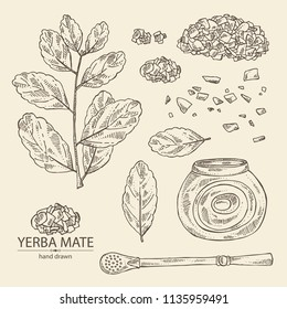 Collection of yerba mate: drink mate, bomber, calabash, and mate branch and leaves. Vector hand drawn illustration.
