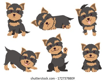 The collection of Yorkshire terrier in many action. Graphic resource about set of dogs Yorkshire terrier for graphic, content, etc.