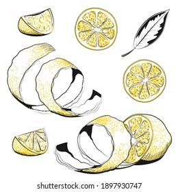 Collections of Lemons - Hand drawn vector illustration. Lemon, slice, leaf, rind, peel