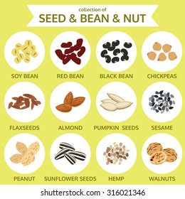 collections of seed & bean & nut, food icon vector illustration