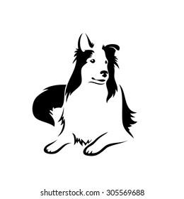 Collie dog - vector illustration