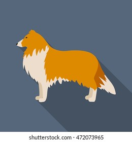 Collie vector illustration icon in flat design