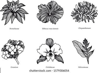 Colombian flowers line art black illustration