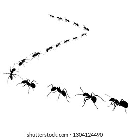 colony of marching ants, ant road