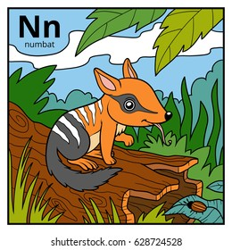 Color alphabet for children, letter N (numbat)