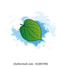 color betel leaf over blue paint stroke vector illustration