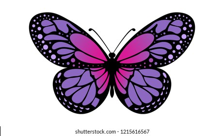 color butterfly pattern