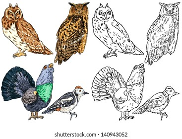 color drawing and contour of wild birds living in forests, birds of prey, owls, woodpeckers, wood grouse