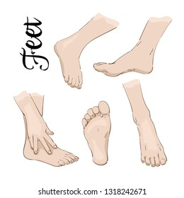 Color drawing of feet, scheme, anatomy, vector
