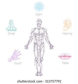 Color Five Senses Hand Lips Eye Ear Nose and Human