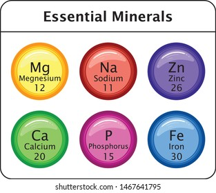 Color Full Essential Minerals calcium phosphorus zinc magnesium iron sodium Vector Illustration