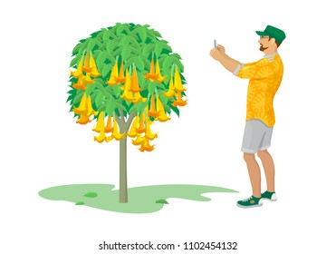 Color graphic drawing of man, photographing on mobile phone tropical plant – brugmansia, with flowers. New impressions he collects in device. Vector illustration, isolated on white background.