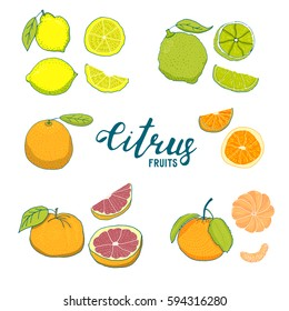 Color illustration of citrus fruits. Linear hand-drawing. Isolated on white background. Big set of fruits.