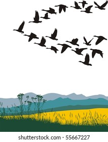 Color illustration of the flying geese