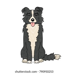 Color illustration. A gray border collie sitting with his tongue out. Element of design.