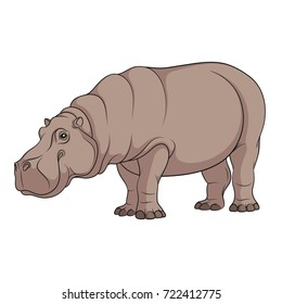Color illustration of a hippopotamus. Isolated vector object on white background.