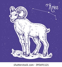 Color illustration of the zodiac sign aries with text Aries and constellation at the sky background. Vector hand drawn sketch of the ram. Image for calendar, poster, almanac, horoscope, astronomy.