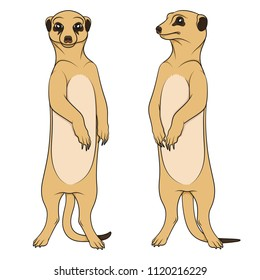 Color illustrations depicting the meerkats. Isolated vector objects on white background.