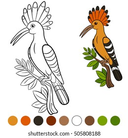 Color me: hoopoe. Cute beautiful hoopoe sits on the tree branch and smiles.